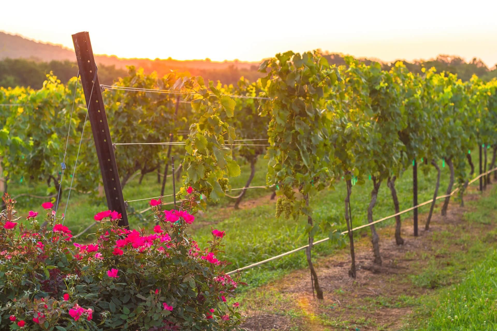Chaumette Vineyards & Winery in Missouri