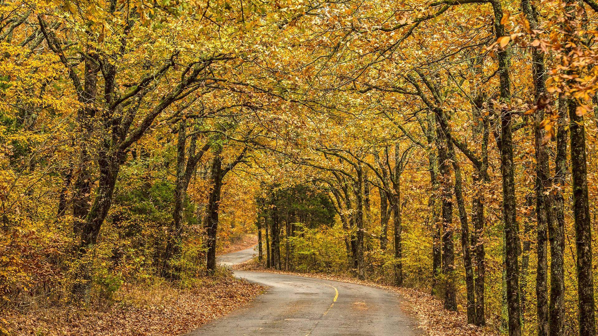 Fall drive in Petit Jean State Park