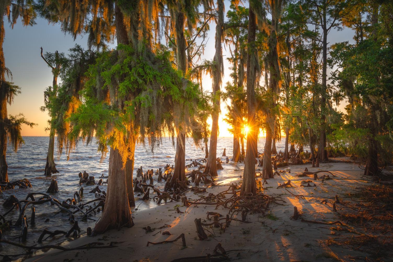 fountainebleau state park louisiana